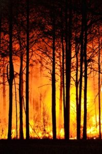 forest-fire-465617__340